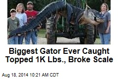 Biggest Gator Ever Caught Topped 1K Lbs., Broke Scale