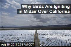 Why Birds Are Igniting Midair Over California