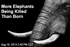 More Elephants Being Killed Than Born