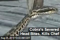 Cobra's Severed Head Bites Chef —and Kills Him