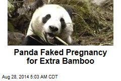 Panda Faked Pregnancy for Extra Bamboo