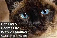 Cat Lives Secret Life With 2 Families