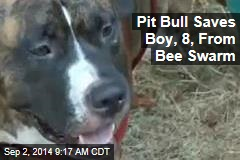 Pit Bull Saves Boy, 8, From Bee Swarm