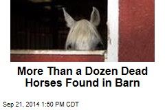 More Than a Dozen Dead Horses Found in Barn