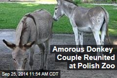 Amorous Donkey Couple Reunited at Polish Zoo