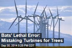 Bats' Lethal Error: Mistaking Turbines for Trees