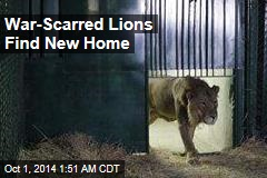 Gaza's Lions Find New Home