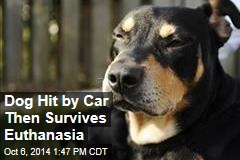 Dog Hit by Car Then Survives Euthanasia