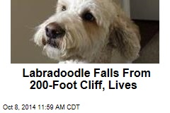 Labradoodle Falls From 200-Foot Cliff, Lives