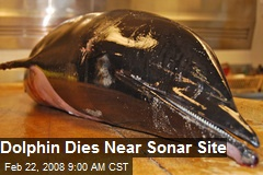Dolphin Dies Near Sonar Site
