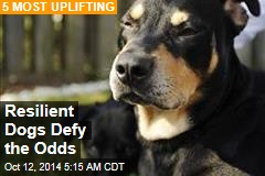 Resilient Dogs Defy the Odds
