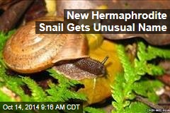 New Hermaphrodite Snail Gets Unusual Name