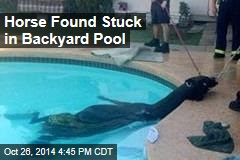 Firefighters Find Horse in Swimming Pool