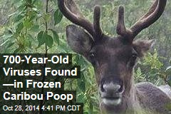 700-Year-Old Viruses Found —in Frozen Caribou Poop