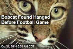 Bobcat Found Hanged Before Football Game