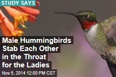 Male Hummingbirds Stab Each Other in the Throat for the Ladies