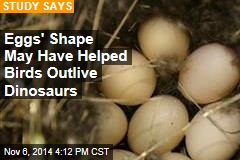 Eggs' Shape May Have Helped Birds Outlive Dinosaurs
