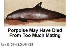 Dumped Porpoise May Have Died From Too Much Mating