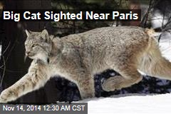 Big Cat Sighted Near Paris