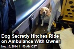 Dog Secretly Hitches Ride on Ambulance With Owner