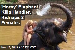 'Horny' Elephant Kills Handler, Kidnaps 2 Females