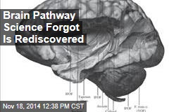 Brain Pathway Science Forgot Is Rediscovered