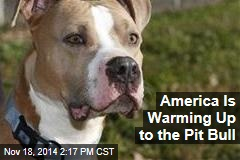 America Is Warming Up to the Pit Bull