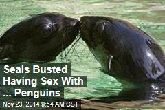 Seals Busted Having Sex With ... Penguins