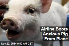 Airline Boots Anxious Pig From Plane