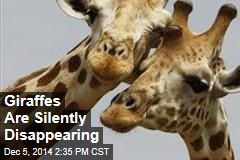 Giraffes Are Silently Disappearing