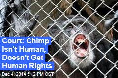 Court: Chimp Isn't Human, Doesn't Get Human Rights