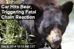 Car Hits Bear, Triggering Fatal Chain Reaction