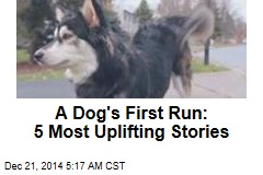 A Dog's First Run: 5 Most Uplifting Stories