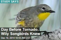 Day Before Tornado, Wily Songbirds Knew