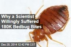 Scientist Making Bedbug Trap Puts Up With 180K Bites