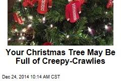 Your Christmas Tree May Be Full of Creepy-Crawlies