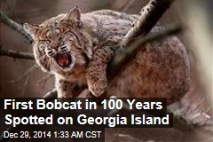 First Bobcat in 100 Years Spotted on Georgia Island
