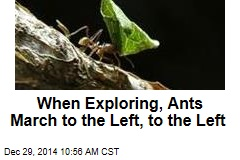 When Exploring, Ants March to the Left, to the Left