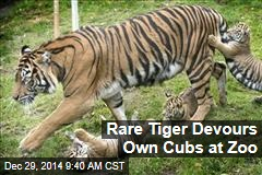 Rare Tiger Devours Own Cubs at Zoo