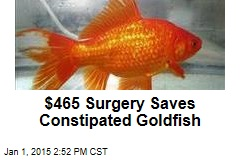 Surgery Saves Constipated Goldfish