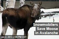 Snowmobilers Save Moose in Avalanche