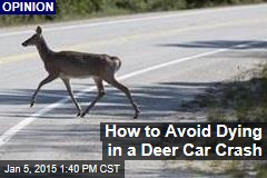 How to Avoid Dying in a Deer Car Crash