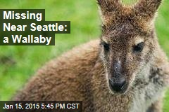 Missing Near Seattle: a Wallaby