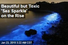 Beautiful But Toxic 'Sea Sparkle' On the Rise