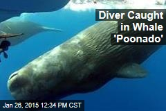 Diver Caught in Whale 'Poonado'