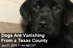 Dogs Are Vanishing From a Texas County