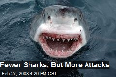 Fewer Sharks, But More Attacks