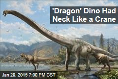 'Dragon' Dino Had Neck Like a Crane