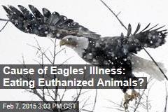 Cause of Eagles' Illness: Eating Euthanized Animals?