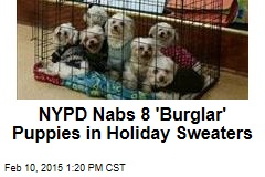 NYPD Nabs 8 'Burglar' Puppies in Holiday Sweaters